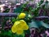 Flower, bud, stem