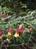 April Flowers (Wake County, NC)
