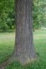 Tree trunk (Niagara Falls, ON)-Late Summer