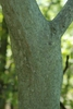 Tree trunk (Schuyler County, NY)-Early Fall
