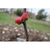 Flower bud and stem