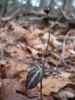 Seed Capsule
