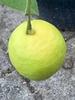 Ripening fruits
