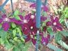 flower, Charlotte NC