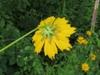 Back of flower