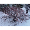 Winter Form