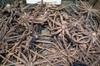 Eremurus roots
