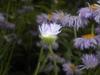 Underside of flower and hairy stem.