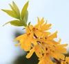 Flower and leaf detail
