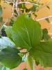Leaf in spring
