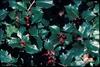 Ilex opaca Fruit and Leaf