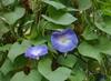 Flower, leaf and bud