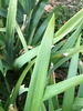 Leaf close-up (cabarrus Co. NC)