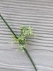 flower, spring, Durham County, NC