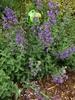 habit, spring, Durham County, NC