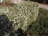 Hedge form