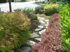 Spiraea japonica 'Lime Mound' in a Paver Pathway Garden