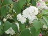 Flower, stem