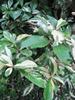 'Palette' leaves