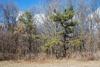 Tree form (Seneca County, NY)-Late Winter