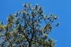 Branches (Seneca County, NY)-Late Winter