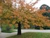 Fall form