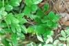 Branches (Glynn County, GA)-Mid Spring