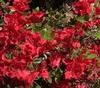 """""""Autumn Fire""""  Flowers"""