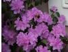 PJM = Blooms