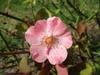 Flower - Summer