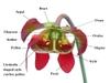 Sarracenia parts
