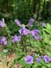 flower closeup, Union County, NC