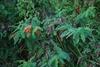 Plant form (Nassau County, FL)-Mid Summer