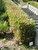 As a hedge