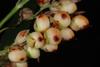 Close-up of fruits (Greensboro, NC)-Mid Fall
