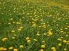 Growing in a field