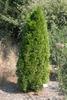 'Smaragd' Form