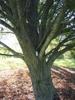 branch attachment