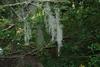 Vine form (Northampton County, VA)-Early Fall