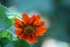Flower Close-up (Johnston, NC)