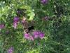 Flower with hummingbird moth