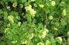 Stems, leaves, flowers