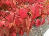 Fall leaf color Asheville, NC