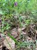 seed pod, Union County, NC