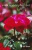 Rosa 'MACdub'