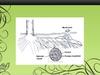 Ectomycorrhizal