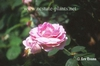 Rosa 'AUShero'