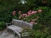Hydrangea arborescens 'NCHA1' PP20,765