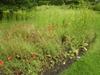 In a meadow