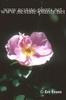 Rosa laevigata 'Anemone'